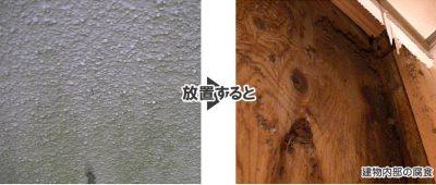 外壁藻やカビの発生