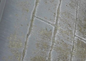 屋根/藻やカビの発生